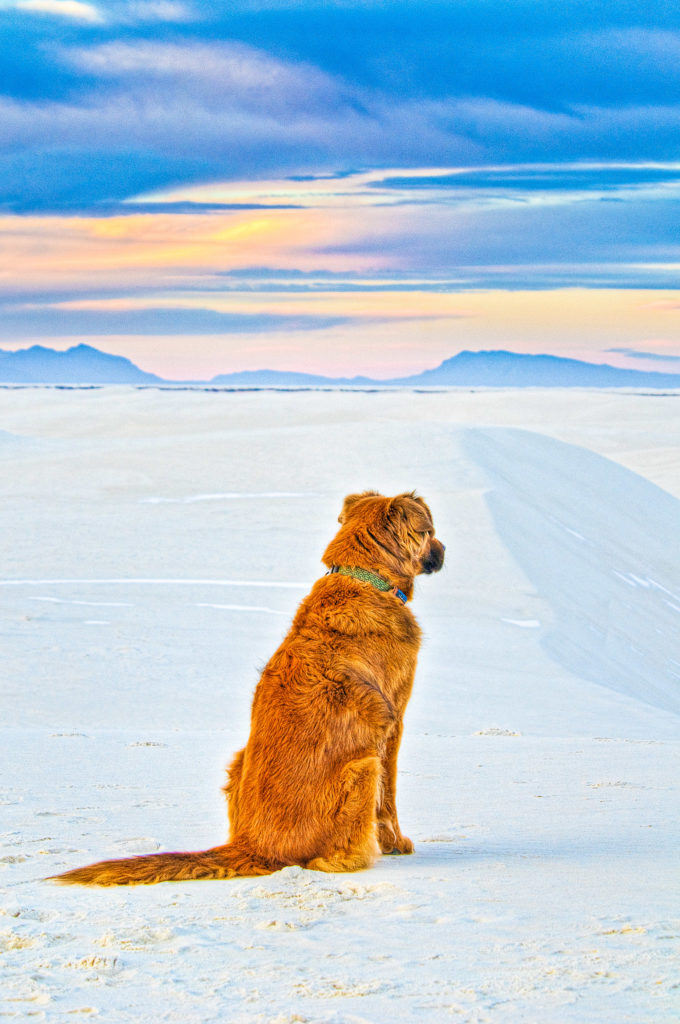 Dune dog in White Sands National Park, New Mexico