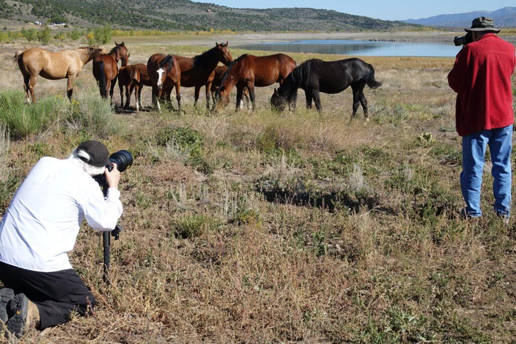 wild horses; southern Colorado